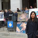 Youth assistant, Christina George, stands in front of a press conference at the California State Capitol for Animal Lobby Day. (Feb. 2009)